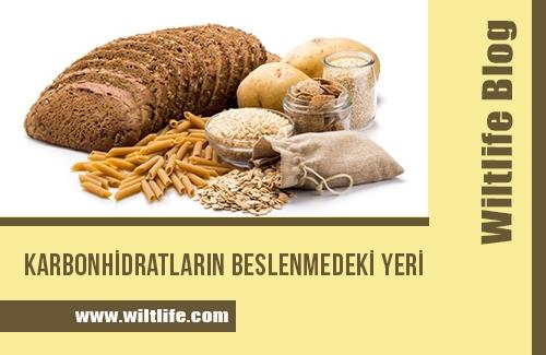 Karbonhidratların Beslenmedeki Yeri