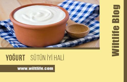 Sütün Güzel Hali Yoğurt