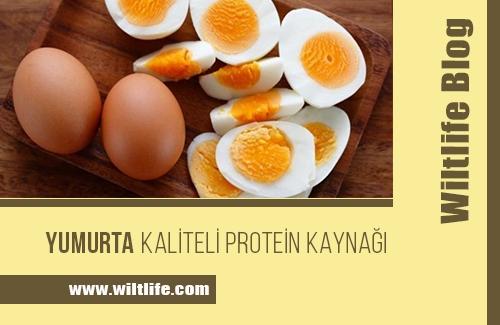 Yumurta! En Önemli Protein Kaynağı